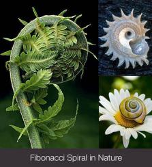 Fibonacci Spiral in Nature