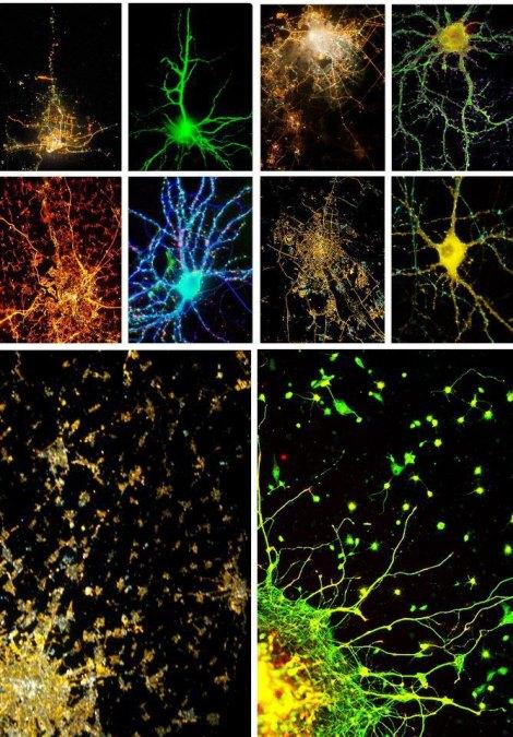 neurons-cities