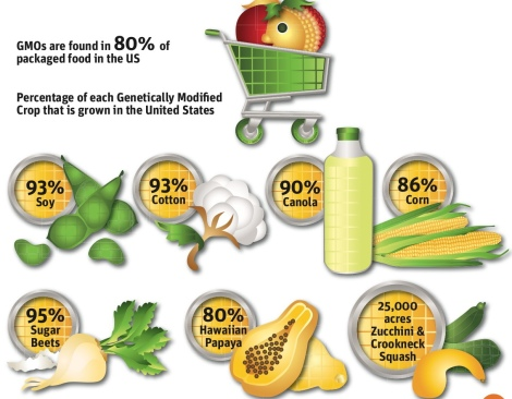 gmos-percentages-monsanto