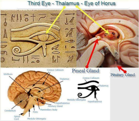 Pineal Gland Eye of Horus